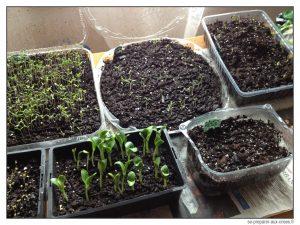 10 id es pour r aliser vos semis de jardin potager astuces en ligne. Black Bedroom Furniture Sets. Home Design Ideas